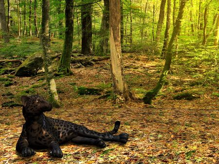 BLACK PANTHER - A beautiful black panther lies down in the deep forest too rest. photo