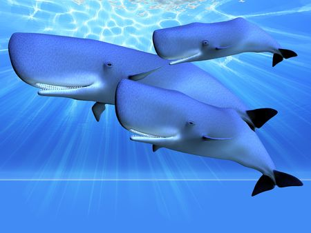 cetacean: BLUE OCEAN - Three whales swim as a pod in beautiful blue ocean.