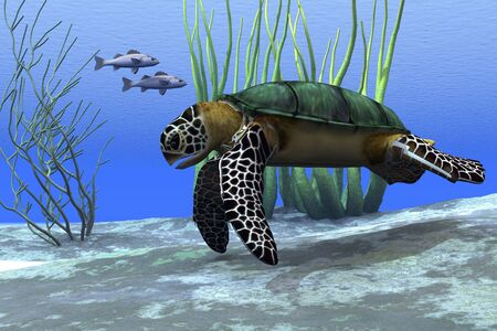 sea food: SEA TURTLE - A sea turtle makes its way along the bottom of the sea looking for food. Stock Photo