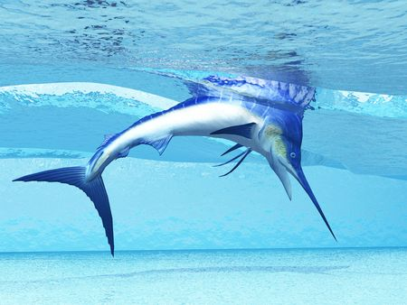 pez espada: Buceo - un Marlin se sumerge en olas superficiales buscando peces para comer.