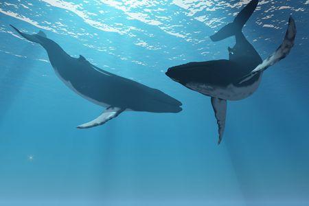 ballena azul: Maravillas de ballena - lesbianas de dos de las ballenas jorobadas en los rayos de luz del sol.