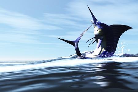 pez vela: WILD CHILD - un Marlin azul salta a trav�s de la superficie del oc�ano en un spray de agua. Foto de archivo