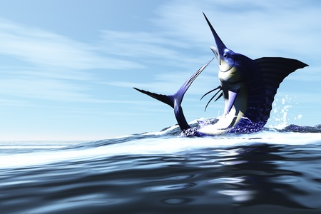WILD CHILD - A Blue Marlin jumps through the ocean surface in a spray of water.