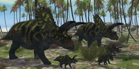 hatchling: Coahuilaceratops Dinosaur - Two mother Coahuilaceratops dinosaurs escort their baby hatchlings among the palm trees of prehistoric times. Stock Photo