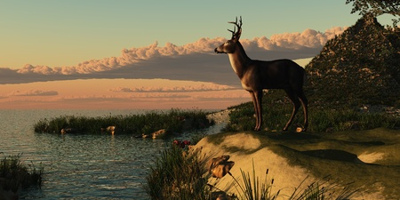 Deer Lake - A beautiful buck with his antlers makes a striking figure overlooking a lake.