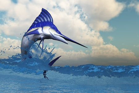 pez vela: Marlin - un Marlin azul muestra sus bellos colores al estallido del océano.