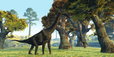 titan: Brachiosaurus - Two Brachiosaurus dinosaurs walk among large trees in the prehistoric era.