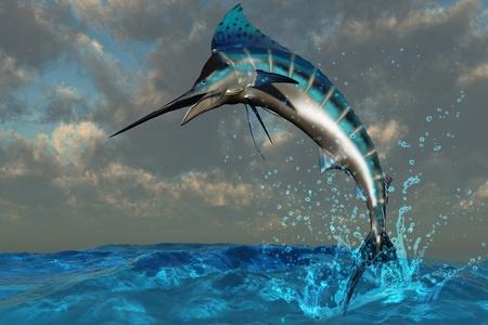 pez vela: Bienvenida de Marlin azul - un espectacular Marlin azul parpadea sus colores iridiscentes como irrumpe desde el oc�ano. Foto de archivo