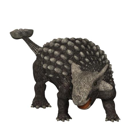 beenderige: Ankylosaurus 01 - Ankylosaurus was een gepantserde dinosaurus uit de Creataceous Periode van Aarde geschiedenis. De fossielen zijn ontdekt in het westen van Noord-Amerika. Het had een zwaar gepantserde lichaam en een hamer als benige staart af te weren roofdieren. Stockfoto