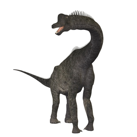 Brachiosaurus 01 - The Brachiosaurus dinosaur was a sauropod from the Jurassic Period. Its forelimbs were much longer then its hind limbs giving it the look of the modern giraffe. This herbivore browsed the treetops in North America. photo
