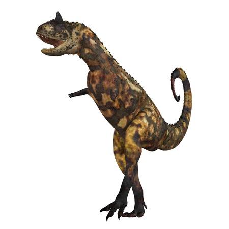 Carnotaurus 01 - El dinosaurio Carnotaurus era un carnívoro grande en el Período Cretácico de la historia de la Tierra. Sus fósiles han sido hallados en América del Sur. Su nombre significa el consumo de carne de toro de los cuernos en su cabeza. Foto de archivo - 10677124