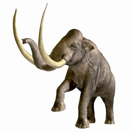 Columbian Mammoth 01 - The Columbian Mammoth is one of an extinct megafauna beasts from the Pleistocene Period of Earths history. Its fossils have been discovered in North America and as far south as Nicaragua and Hondurus. Stock Photo