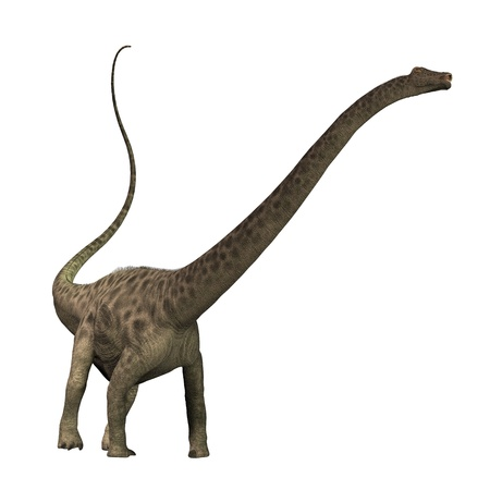 treetops: Diplodocus 01 - The Diplodocus dinosaur was a herbivore sauropod of the Jurassic Period of Earths history. Its fossils have been found in western North America. With its long neck it had no trouble in reaching the high treetops for foliage.
