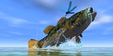 a freshwater fish: Red Eye Bass - A beautiful Red Eye Bass jumps but just misses a colorful dragonfly. Stock Photo