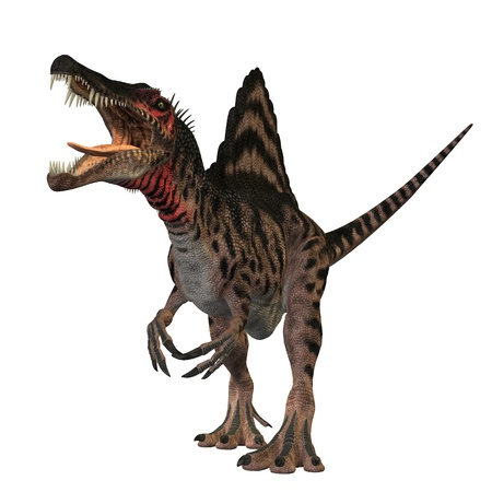 The Spinosaurus dinosaur was a huge carnivore of the Cretaceous Period of Earths history. It was larger then Tyrannosaurus Rex and Giganotosaurus. Its fossils have been found in North Africa. The only known fossils bones of this dinosaur were destroyed in