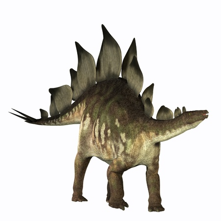 Stegosaurus 01 - The Stegosaurus dinosaur is known for its distinctive tail spikes and plates along its spine to defend itself. Fossils bones have been found in Jurassic deposits in North America and Europe. Stock Photo