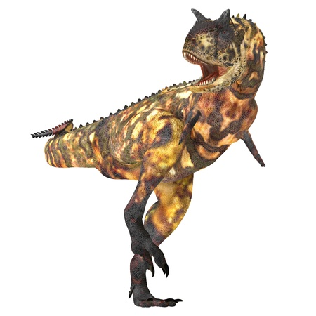 Carnotaurus 02 - The Carnotaurus dinosaur was a large carnivore in the Cretaceous Period of Earths history. Its fossils have been found in South America. Its name means meat eating bull for its two horns on its head. Stock Photo