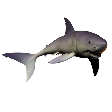 Mako Shark 01 - The Mako shark is one of the premier predators of reef areas containing schooling fish prey. Stock Photo - 10755818