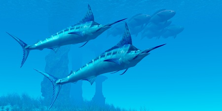 swordfish: Marlin 02 - Two sleek Blue Marlins swim close to a school of fish near some ocean ruins. Stock Photo