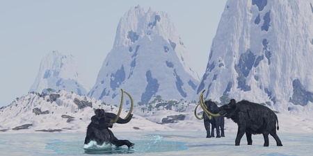 mammoth: Woolly Mammoth 02 - A bull from a Woolly Mammoth herd struggles for survival after he falls through the ice on a frozen lake. Stock Photo