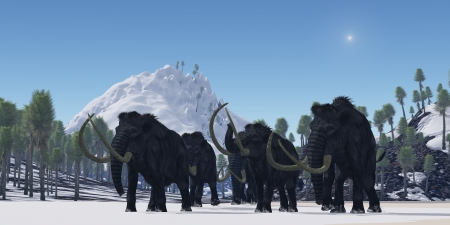 migrate: Woolly Mammoth - A herd of Woolly Mammoths migrate to a warmer climate in the Pleistocene Age.