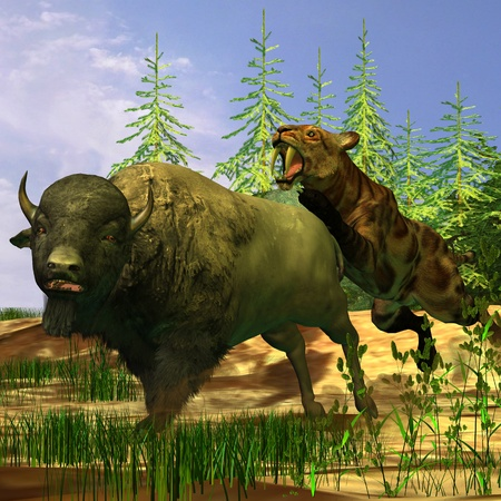 Saber-Tooth Tiger - A Saber-Tooth Cat pounces onto a frightened Buffalo in prehistoric times  photo