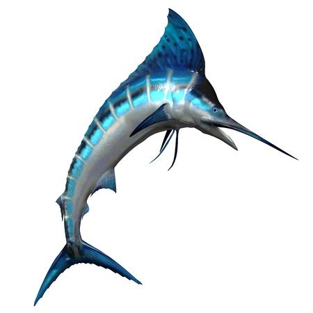 pez vela: Marlin 02 - El pez Marlin es uno de los depredadores m�s r�pidos de nataci�n de nuestros oc�anos y la pesca es un favorito para la pesca de altura Foto de archivo