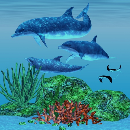 sea creature: Dolphin 02 - Three dolphins glide around a reef area looking for fish to eat while two Manta Rays swim nearby