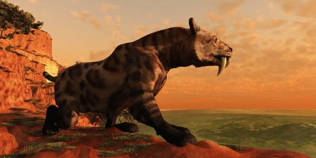 Saber-Tooth Cat 01 - A Smilodon Cat from prehistoric times is on the prowl for his next prey