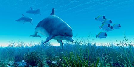 underwater fishes: Dolphin Pod - A school of Blue Tango fish beat a hasty retreat as a pod of dolphins show up on the scene