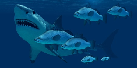 encounter: Megalodon Shark - A school of ocean fish encounter a monstrous Megalodon shark in prehistoric times