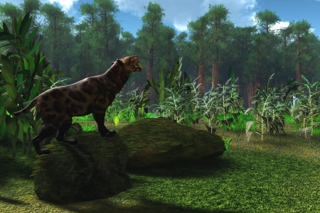 Saber-Tooth Cat Age - A Smilodon cat roars to warn any other males to leave his territory Stock Photo - 14930632