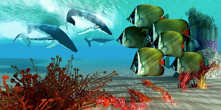 butterflyfish: Diving Whales - A school of Redtail Butterfly fish watch as a herd of Humpback whales dive from the ocean surface