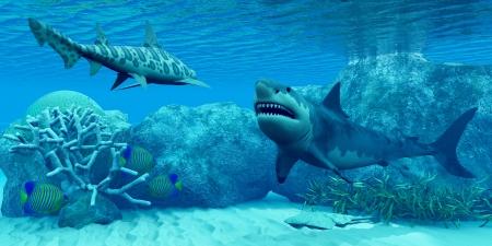 水中世界 - 天使鮫が平坦化自体、底に対してと 3 ロイヤル エンゼルフィッシュ ヒョウのサメで、偉大な白いサメを満たしているといくつかのサンゴ 写真素材