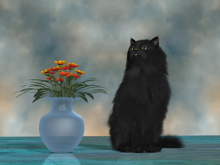 Simba the House Cat - Simba, the fluffy black cat, gives off haughty grander knowing he is a beautiful  Stock Photo