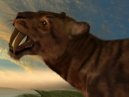 Smilodon Cat - The Saber-Tooth Cat also called Smilodon had dagger like front canine teeth  photo