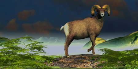 hunted: Big Horn Sheep - A Big Horn Sheep ram stands proudly on a mountain rock