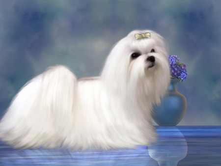 puta: Maltés Perro - El perro maltés es una raza pequeña de perro en el grupo de juguetes que se desarrolló a partir de la Región del Mediterráneo