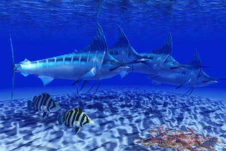 Blue Marlin Pack - A Basket Starfish slithers across the sand as two Siamese Tiger fish and a pack of Blue Marlin swim by  Stock Photo