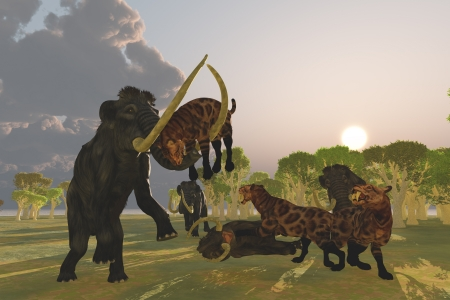 woolly: Mammoth and Saber Tooth Cat - A pack of Saber Tooth Cats attack a small Woolly Mammoth while his herd comes to the rescue  Stock Photo