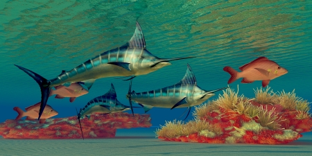 Marlin Reef - Blue Marlin and Humpback Red Snapper fish glide over a colorful ocean reef full of coral plants