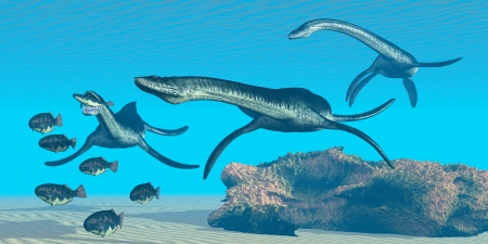 Plesiosaurus Ocean - A pack of Plesiosaurus dinosaurs hunt a school of Dapedius fish in prehistoric seas  photo