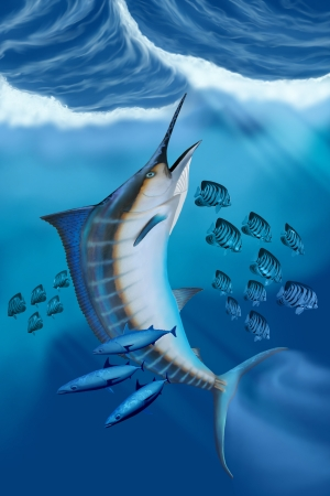 Marlin Fish - Small fish scatter as a huge Blue Marlin swims to the ocean surface with a burst of speed. Stock Photo