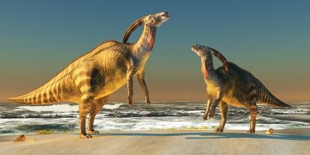 bellow: Beach Parasaurolophus - Dos Parasaurolophus dinosaurios abajo el uno al otro para reclamar territorio en una playa de la costa. Foto de archivo