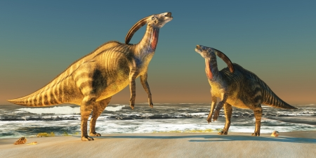 cretaceous: Parasaurolophus Beach - Two Parasaurolophus dinosaurs bellow at each other to claim territory on a seacoast beach.
