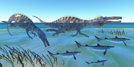 Suchomimus Hunting Fish - Two Suchomimus dinosaurs hunt small sharks in ocean shallow water. photo