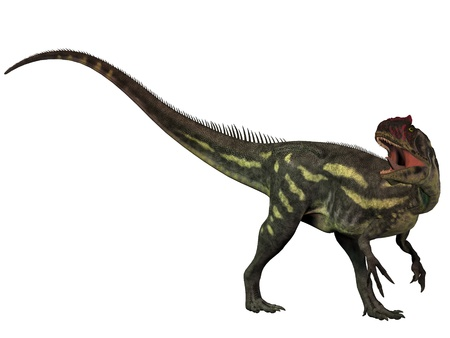 Allosaurus Isolated - Allosaurus was a large theropod predatory dinosaur which lived in the late Jurassic period