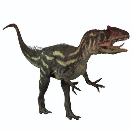dinosauro: Allosaurus on White - Allosaurus era un grande carnivoro predatore dinosauro che visse nel periodo Giurassico Archivio Fotografico