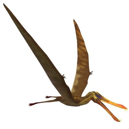 Anhanguera Pterosaur - Anhanguera is a genus of Pterosaur which was flying dinosaur in the Cretaceous period  photo