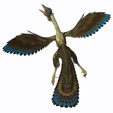 prehistoric animals: Archaeopteryx on White - Archaeopteryx is known as the earliest bird and was a bridge species between dinosaurs and modern birds